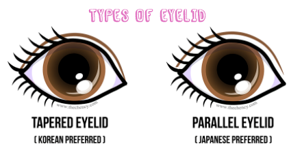 types of eyelid